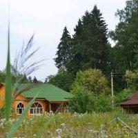 Лето :: Гоша Казачков