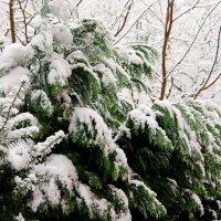 Зима :: Сергей Бордюков