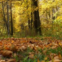 Картина Осени :: Сергей Беляев