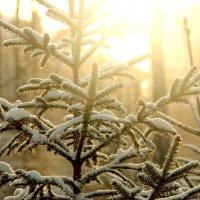 зима :: Ульяна Сафронова