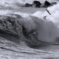 Волна :: Беспечный Ездок