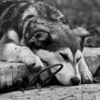 Одиночество :: Александр Неверов