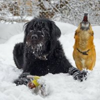 -УУУ,  Отдай игрушку собака! )) :: Ирэна Мазакина
