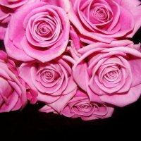 Розовые розы... :: Анна Шабунина
