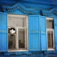 Зимние коты :: Александра Румянцева