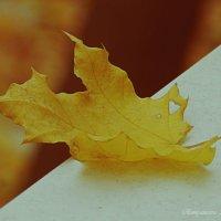 Осень :: Александра Румянцева