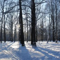 Панорама зимнего леса :: Мария Попова
