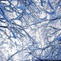 Снежные кружева :: Мария Попова