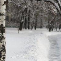Зима :: Ирина Татьяничева