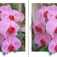Орхидея в рамке :: Виктор Нежельский