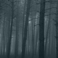 сергей лесив - а на рассвете был туман :: Фотоконкурс Epson