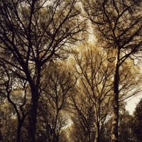 Евгения Вялкина - Лес до небес :: Фотоконкурс Epson