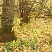 Осенний лес :: Ирина Ермолаева