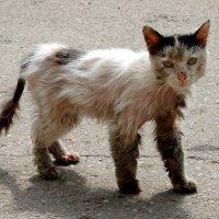 Тетя тетя кошка, выгляни в окошко....! :: Вероника Любимова