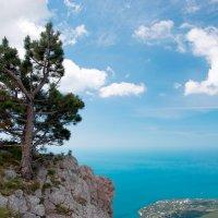 И на камнях растут деревья :: Андрей Агешин