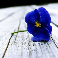 Цветок :: Маргарита Красовская
