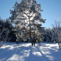 Мороз и солнце :: Диана Задворкина