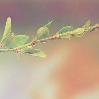 растение :: Da Zh