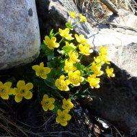 Цветы и камень :: Елена Артамонова