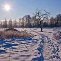 зимний день :: Виктория Колпакова