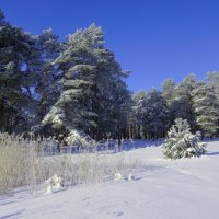 Седой лес :: Владимир Орлов