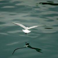 Над водой :: Роман Махвиладзе