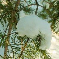 в лесу можно найти много красивого ) :: Анастасия Иванова