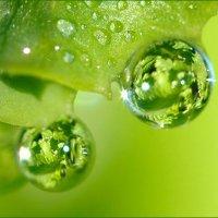 капельки росы :: маргарита альменева