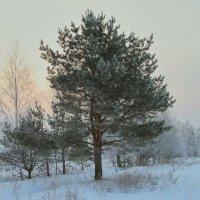 Морозное утро. :: Евгений Поляков