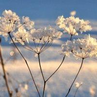 Снежный цветок :: Диана Задворкина