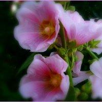 Цветы :: Надежда Духанина