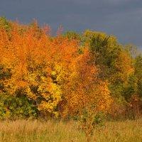 Среди осенних тёмных туч пробился яркий солнца луч :: Сергей Беляев