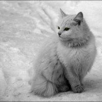 Уличный кот 09.02.13 :: jynjy dfoty