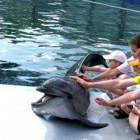 В Московском дельфинарии. :: Евгения Тузова