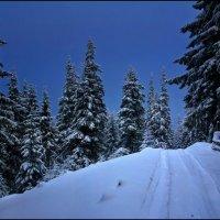 Зимняя ночь :: Елена Кошель