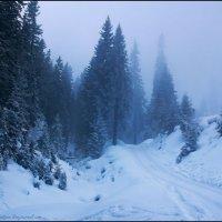 Туманный день :: Елена Кошель