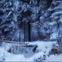 Настоящая зима :: Елена Кошель