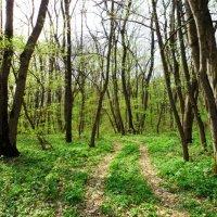 Весна в лесу. :: Жанна Савкина