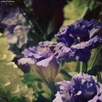 Цветок :: Михаил Кобзев