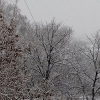 Неожиданный снег :: Сергей Кондратович