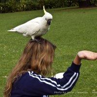 Кто же так милостыню просит! Ниже руку держи, кому говорю! :: Евгений Лимонтов