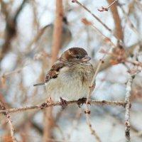 Птичка :: Александра К