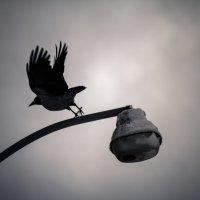 To Heaven :: Елена Михалкина