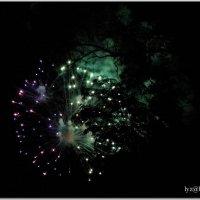 Ночные цветы :: Андрей Lyz