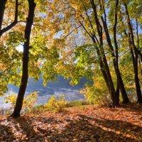 Осень в парке... :: Александр Константинов