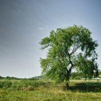 Одиночиство :: Veceslav Beloscurnic