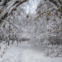 Пришла зима :: Павел Myth Буканов