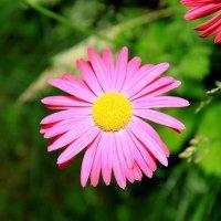 Дачные цветы. :: Anna Groshikova