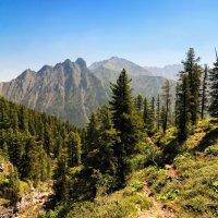 Горный лес :: Виктор Никитин