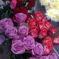 Розы :: Анна Рябинина